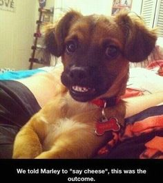 Say cheese :D