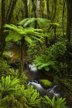 Tuatapere Hump Ridge Track, Southland, New Zealand.