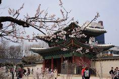 서울 창경궁 홍화문