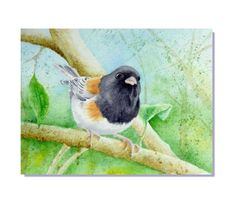 "ORIGINAL Watercolor Art Dark Eyed Junco Backyard Bird Painting 5x7"""