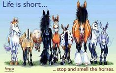 Life is short. ..stop and smell the horses.