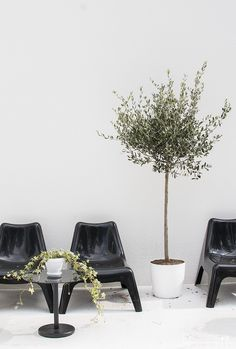 Ikea chairs and just a few accessories is all you need! Small Outdoor Spaces, Outdoor Rooms, Outdoor Living, Outdoor Decor, Outdoor Landscaping, Outdoor Plants, Outdoor Gardens, Garden Pool, Terrace Garden