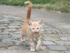 Samara Simons Gratis en niet gratis katjes !! 18 augustus Dit katje werd in de tuin van een collega gevonden en is vermoedelijk daar gewoon achtergelaten. Daarom ben ik nu op zoek naar een goede ziel die dit arme sukkeltje een warme thuis kan geven. Wie interesse heeft stuur gerust een berichtje. Ik schat dat het katje een 9 weken is.
