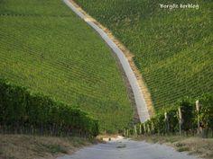Villány wine region