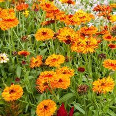 Landleven - 12 Oranje bloeiers voor in de tuin