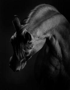 Черно-белые фотографии лошадей - Мой Конь