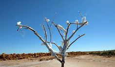 Salz, Strand und Termiten: Onslow.