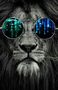 (Top Best Trippy Background & Psychedelic Wallpaper For Desktop, Mobile Animals And Pets, Cute Animals, Lion Wallpaper, Lion Art, Belle Photo, Big Cats, Cool Artwork, Diy Painting, Animal Kingdom