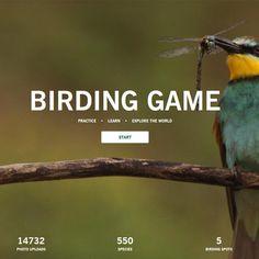 Practice, learn and explore the world of birding! Play the SWAROVSKI OPTIK Birding Game: www.birdinggame.com #birding #birds #ornithology #seetheunseen Birdwatching, Continents, Binoculars, Swarovski, Birds, Explore, Play, Game, Learning