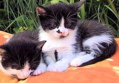 deux chatons confortablement installés, qui entament une sieste, bercés