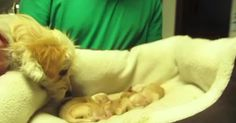 They Planned To Rescue 6 Puppies, But Went Home With 15 Instead via LittleThings.com