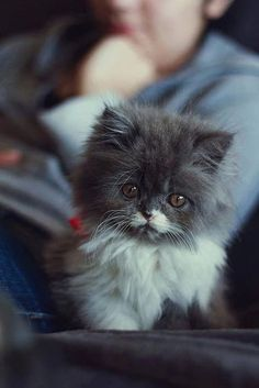 Poor kitty...