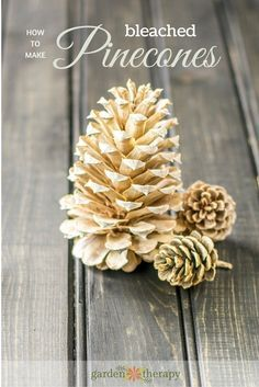 Bleached Pinecones ~ Pinecones (various shapes and sizes) Bleach (1/3) Large bucket Water (2/3) Rubber Gloves Bricks or Large Rock Submerge in water/bleach for 24 hours. They open as they dry. Beautiful and easy!