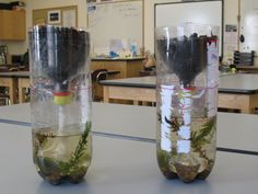 Students experimenting with ways to build ecosystems in a bottle