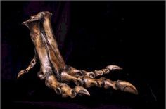 T-Rex Foot casting available at Woodland Ways: http://www.woodlandway.net/Store/Cretaceous%20Store.htm