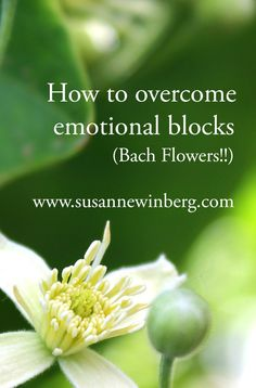 Learn how to overcome emotional blocks with Bach Flower therapy.