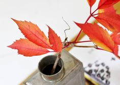 Fall leaves in a tin can