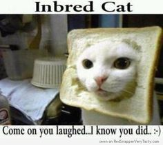 Inbred Cat - Head in Bread (Come on you laughed... I know you did : - )