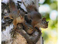 cutest squirrel - Bing Images