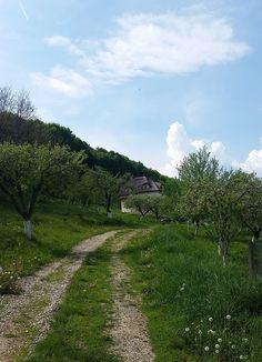 Minunăție de casă în zona Câmpulung | Adela Pârvu - Interior design blogger Romania, Country Roads, Interior, Design, Wooden Ceilings, Design Interiors, Interiors