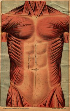 """1884 Body """"Pop Up"""" Book Cover 
