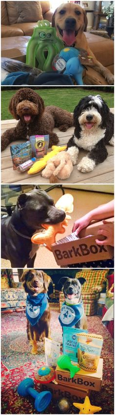 Have a fun themed box full of the best toys & all-natural treats delivered every month! BarkBox pup testers and pup-ruvin' hoomans spend months selecting the best products, but if your pup doesn't ruv an item in their box, we'll send you a replacement better suited for them (Scout's Honor!).
