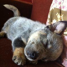 puppy goin home