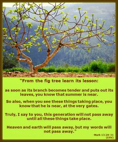 -Mark Parables of Jesus: Budding Fig Tree- About the Kingdom of God The Son Of Man, Son Of God, Miracles Of Jesus Christ, Parables Of Jesus, Jesus Face, Beatitudes, Prince Of Peace, Favorite Bible Verses, Do Not Fear