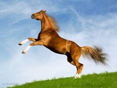 horse - Cerca con Google
