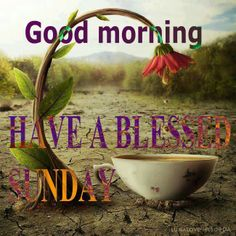 Good Morning. Have a Blessed Sunday/