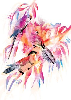 Watercolours and inks - birds by Ella Tjader, via Behance