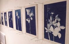 LYNNETTE MILLER cyanotype of twenty plants said to be protective against evil