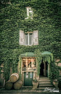 Winery shop in Bourgogne région, France