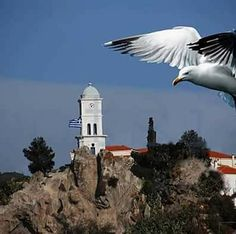 Poros and a Seagull