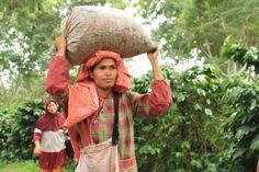 #Coffee producers from Sumatra Gayo #fairtrade #organic
