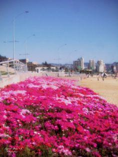 Sector Salinas Playa Los Marineros, Viña del Mar