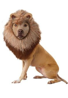California Costume Collections Animal Planet Lion Dog Costume, Large - http://www.thepuppy.org/california-costume-collections-animal-planet-lion-dog-costume-large/