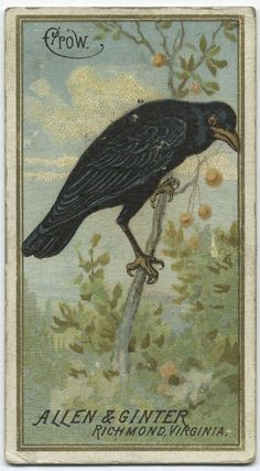 Crow, Allen & Ginter tobacco trading card, 1888(?)
