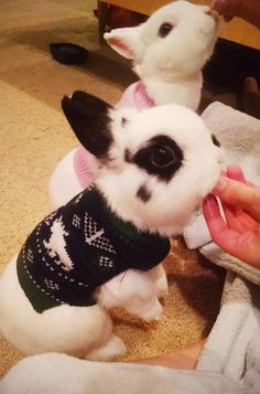 These cozy buns who are all about spreading cheer. | 31 Pictures That Prove 2015 Will Be The Cutest Year Of All Time