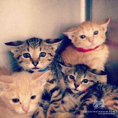 sooo kyoot!! #kittens