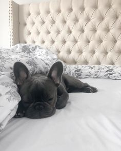 'design french bulldog' by Cute Baby Dogs, Cute Baby Animals, Cute Puppies, Dogs And Puppies, Funny Animals, Cute Dog Pictures, French Bulldog Puppies, Cute Creatures, Fur Babies