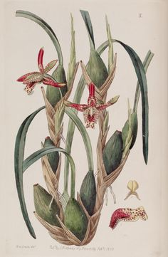 v. 25 (1839) - Edwards's botanical register. - Biodiversity Heritage Library
