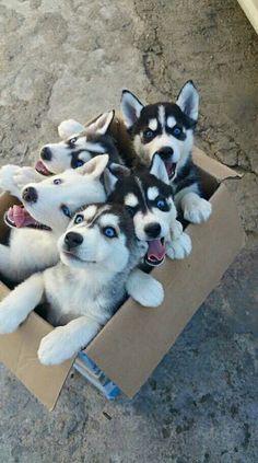 Box full of joy