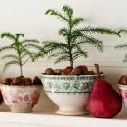Decorate with Tiny Christmas Trees | Midwest Living