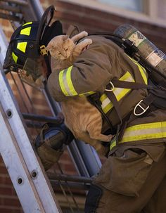 A firefighter rescuing a cat from an Toronto apartment building fire in Feb. 2009.