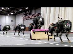 MIT cheetah robot lands the running jump | MIT News