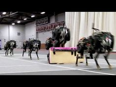 Oh no: MIT's Cheetah robot can jump over hurdles while running