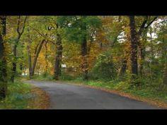 Nicolas de Angelis - Adagio in G Minor (Albinoni) Adagio In G Minor, Music Is Life, Country Roads, Nature, Youtube, Naturaleza, Outdoors, Youtubers, Mother Nature