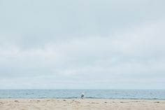 Seagull by the sea... Favorite destination on my California Road trip: Tomales Bay - Limantour Beach | Emilie Waugh Photography
