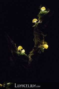 Saxo by night - Multimedia art by Lumycelium Giant Mushroom, Mushroom Crafts, Mushroom Lights, Tree Lamp, Fantasy Forest, I Love Lamp, Handmade Lamps, Fairy Garden Houses, Quirky Home Decor